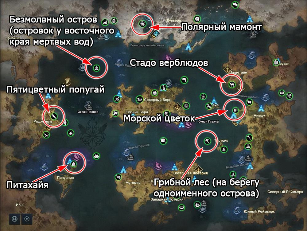 Морские приключения из атласа искателя в Лост Арк 2.0