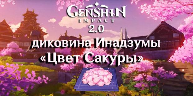 Цвет сакуры в геншин импакт 2.0